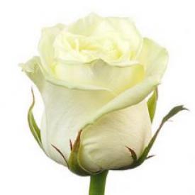 Роза Вайт Наоми